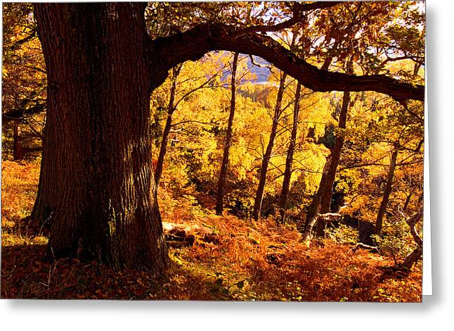 Lake District - Fall Colors Near Aira Force Greeting Card by Dave Lawrance