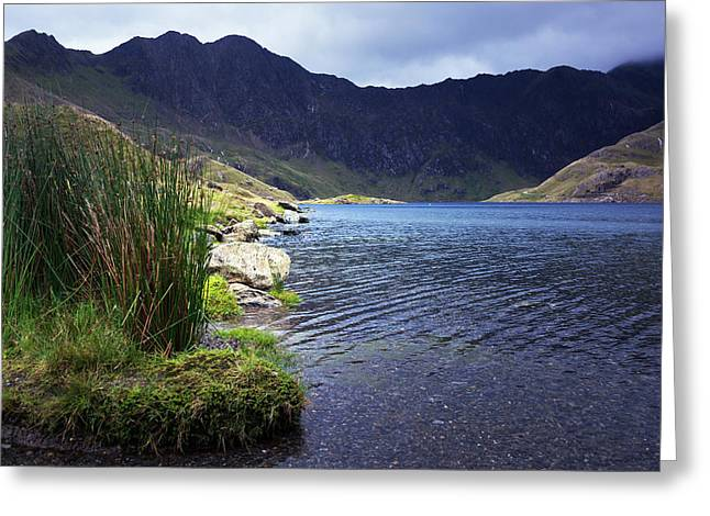 Lake Grass Greeting Card