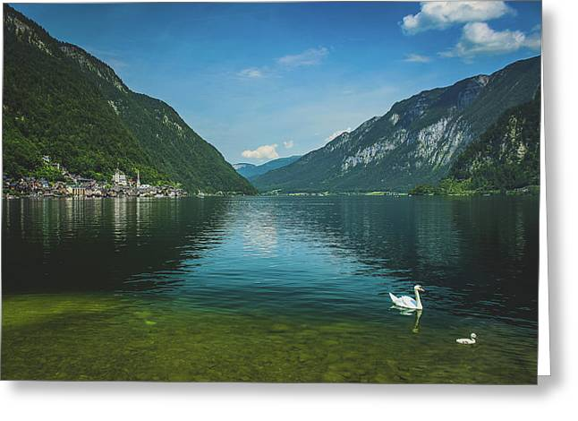 Lake Hallstatt Swans Greeting Card