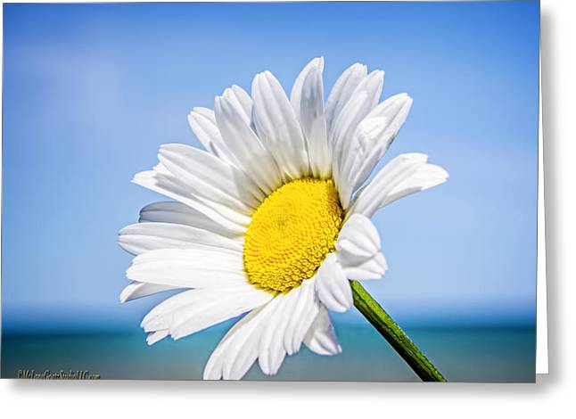 Lake Huron Daisy Greeting Card