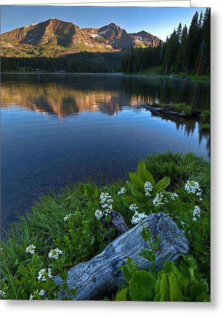 Lake Irwin Wildflowers Greeting Card by Mike Berenson