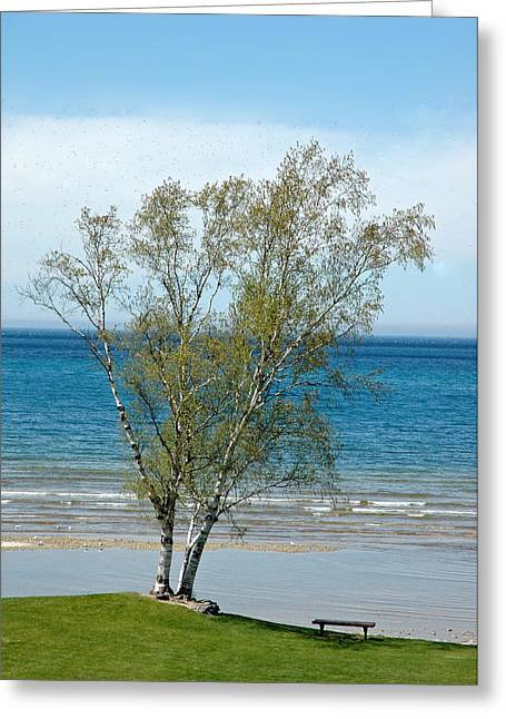 Greeting Card featuring the photograph Lake Michigan Birch Tree by LeeAnn McLaneGoetz McLaneGoetzStudioLLCcom