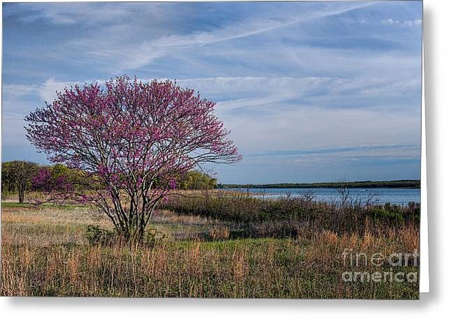 Lake Murray Redbud Tree Greeting Card