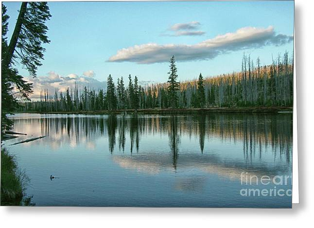Lake Reflections Greeting Card by Myrna Bradshaw