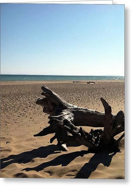 Lake Superior Driftwood Greeting Card