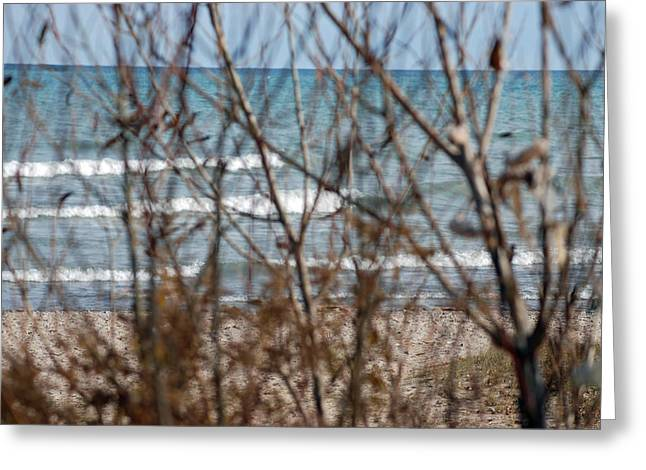 Lake Through A Tree Greeting Card by Lisa Gabrius
