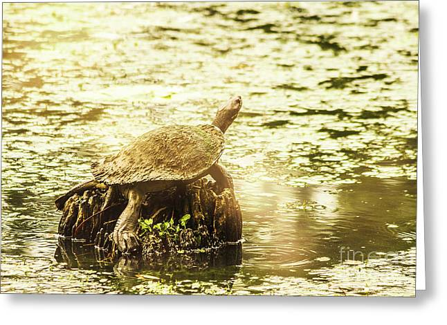 Lake Turtles Greeting Card by Jorgo Photography - Wall Art Gallery