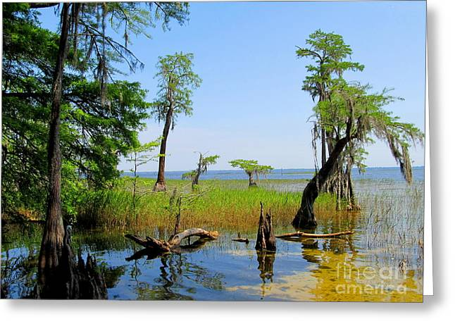 Lake Waccamaw Nc Greeting Card