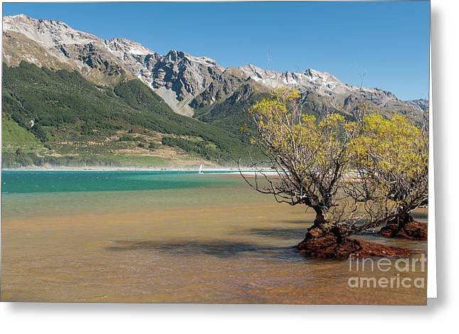 Lake Wakatipu Greeting Card by Werner Padarin