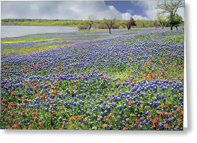 Greeting Card featuring the photograph Lakeside Texas Bluebonnets by David and Carol Kelly