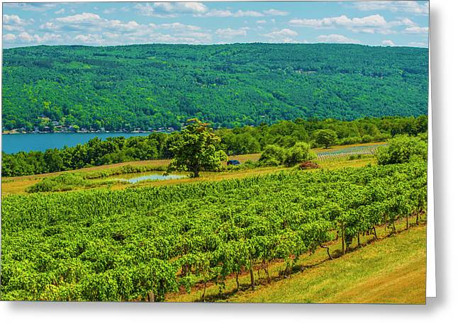 Greeting Card featuring the photograph Lakeside Vineyard I by Steven Ainsworth