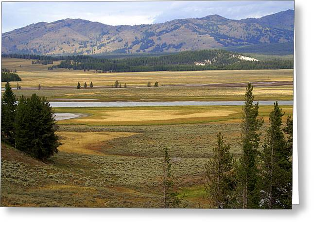 Lamar Valley 1 Greeting Card by Marty Koch