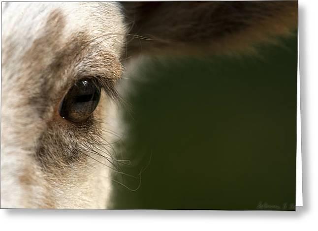 Lamb Eyelashes Greeting Card by Warren Sarle