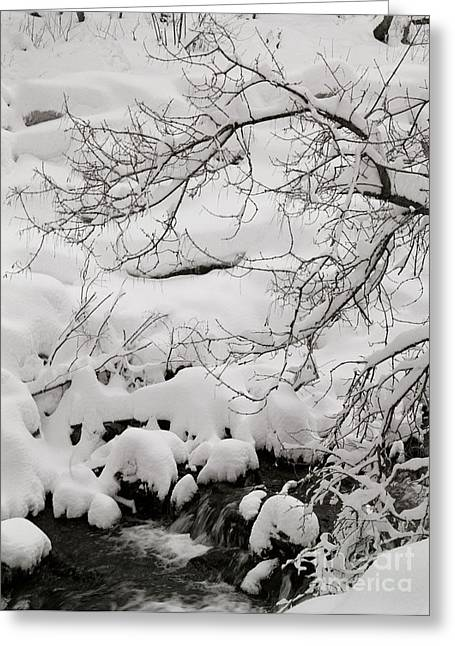 Lambs Canyon In Winter Greeting Card by Dennis Hammer