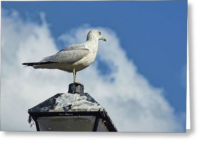 Greeting Card featuring the photograph Lamp Post Eddie by Jan Amiss Photography