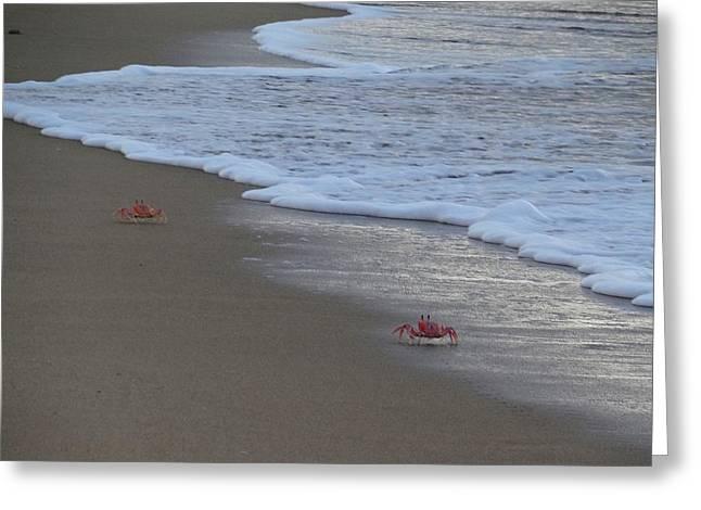 Lamu Island - Crabs Playing At Sunset 4 Greeting Card by Exploramum Exploramum