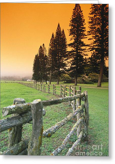 Lanai, City View Greeting Card by Ron Dahlquist - Printscapes