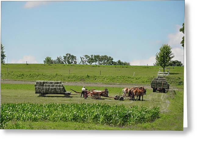 Lancaster County Pennslyvania  - The Amish Greeting Card