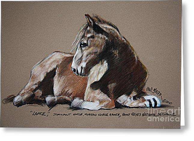 Lance Dominate Horse At Morgan Horse Ranch Of Point Reyes National Seashore Greeting Card by Paul Miller
