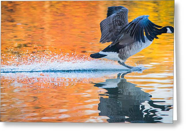 Landing In Autumn Colors Greeting Card by Parker Cunningham