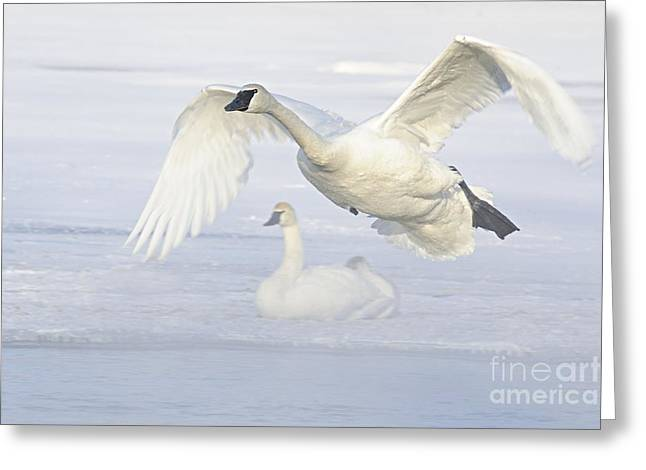 Greeting Card featuring the photograph Landing In The Cold by Larry Ricker
