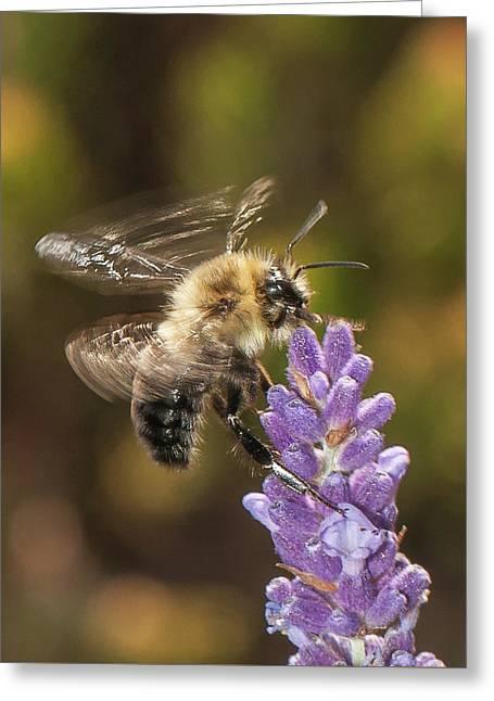 Landing On Lavender Greeting Card