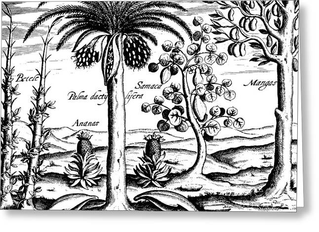 Landscape, Illustration From India Orientalis, 1598  Greeting Card