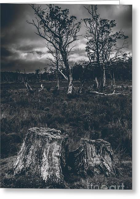 Landscape Of A Dark Creepy Australian Woodland  Greeting Card