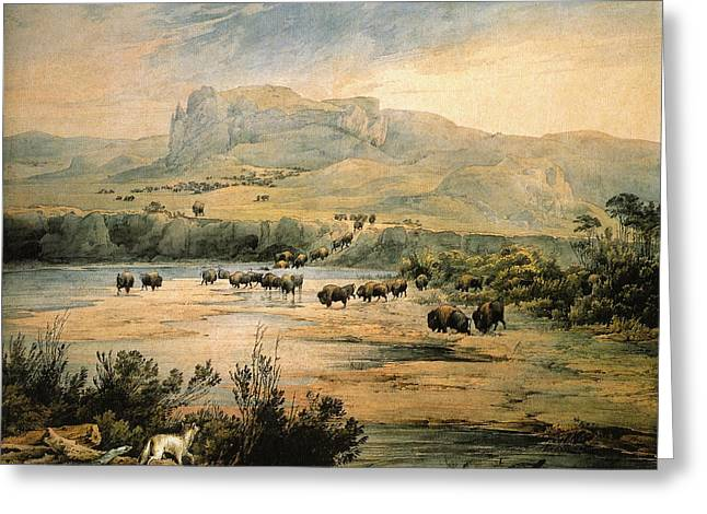 Landscape With Herd Of Buffalo Wall Art Prints Greeting Card
