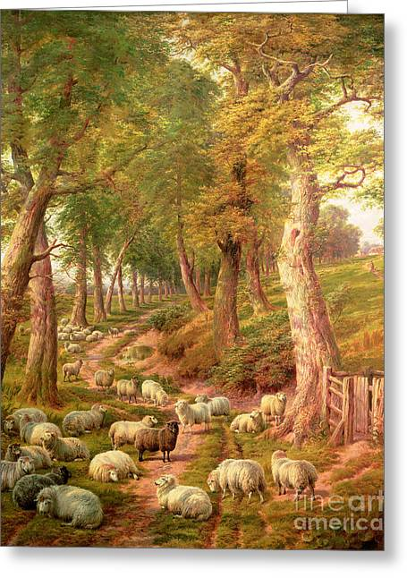 Hills Greeting Cards - Landscape with Sheep Greeting Card by Charles Joseph