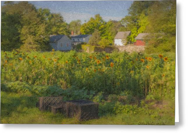 Langwater Farm Sunflowers And Barns Greeting Card