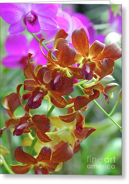 Lankan Orchids IIi Greeting Card by Stanislav Veselovskiy
