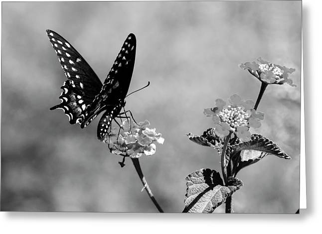 Lantana Lover Bw Greeting Card