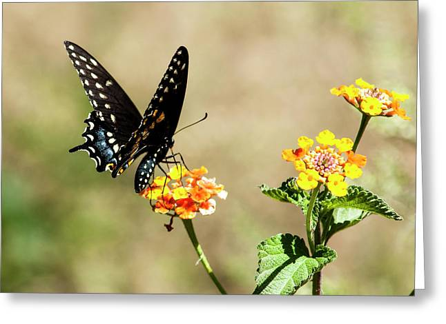 Lantana Lover Greeting Card