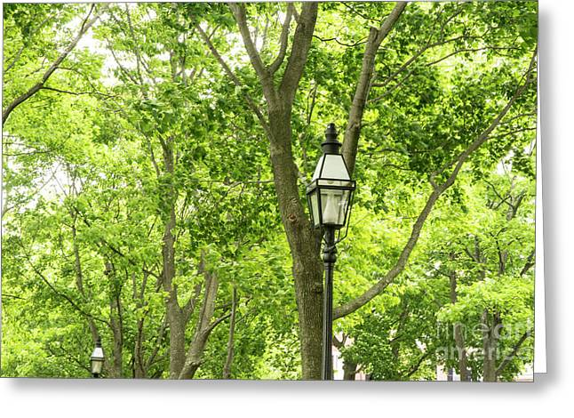 Lanterns Among The Trees Greeting Card