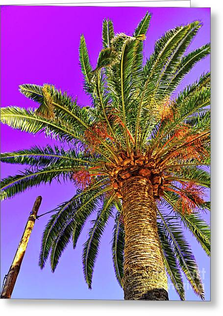 Blue Sky And Palm Tree Greeting Card by Wilf Doyle