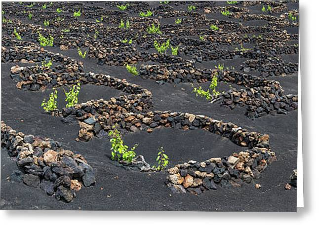 Lanzarote Vineyards Greeting Card by Delphimages Photo Creations