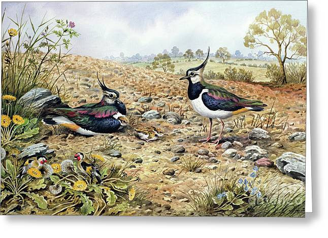 Lapwing Family With Goldfinches Greeting Card by Carl Donner