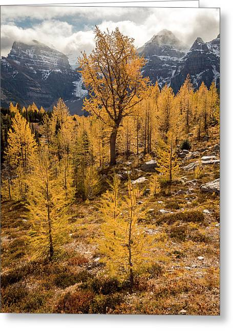 Larch Family Greeting Card