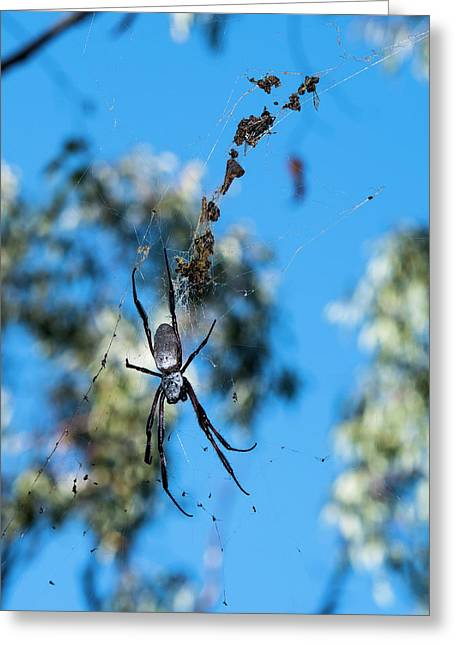 Large Australian Spider Greeting Card by Steven Ralser