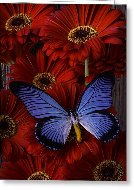Large Blue Butterfly Greeting Card by Garry Gay
