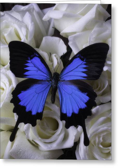 Large Blue Butterfly On White Roses Greeting Card
