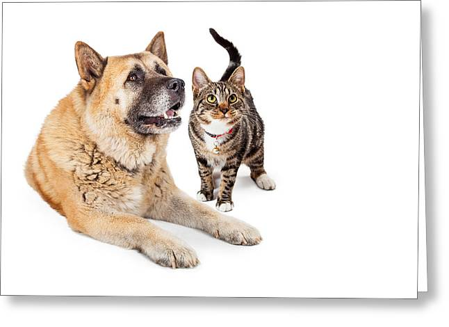 Large Dog And Cat Looking Up Together Greeting Card