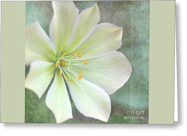 Large Flower Greeting Card