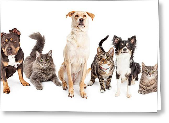 Large Group Of Cats And Dogs Together Greeting Card