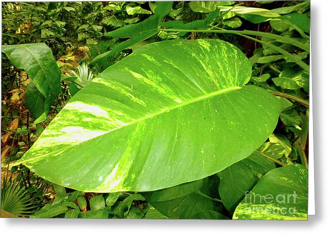 Greeting Card featuring the photograph Large Leaf by Francesca Mackenney