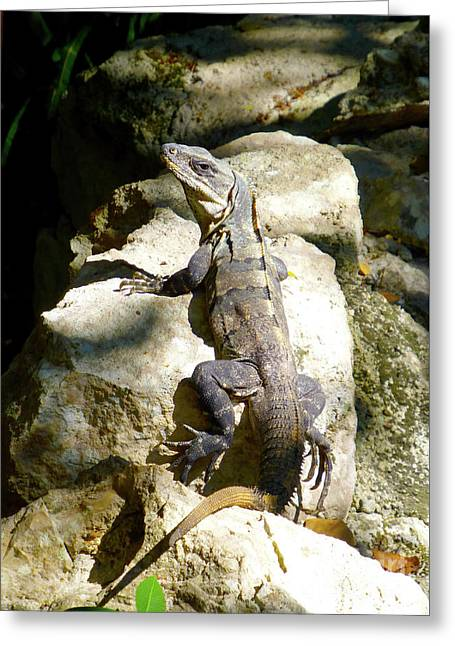 Greeting Card featuring the photograph Large Lizard M by Francesca Mackenney