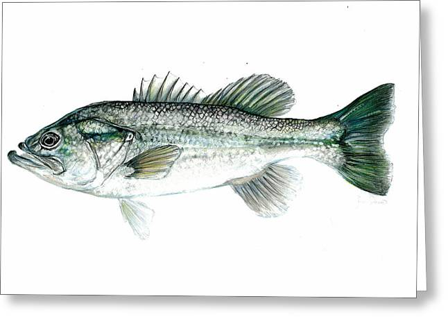 Bass Fish Mixed Media Greeting Cards - Large Mouth Bass Greeting Card by Jim  Romeo