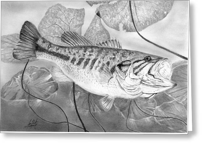 Large Mouthed Bass Drawing Greeting Card