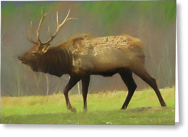 Large Pennsylvania Bull Elk. Greeting Card
